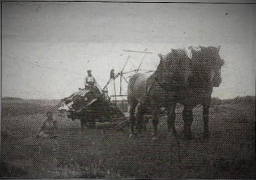 faucheuse et chevaux
